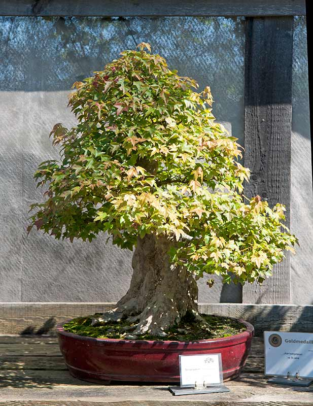 Bonsai Photo of the Day 3-24-20