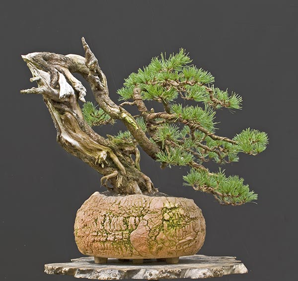 Bonsai Photo of the Day 3-30-20