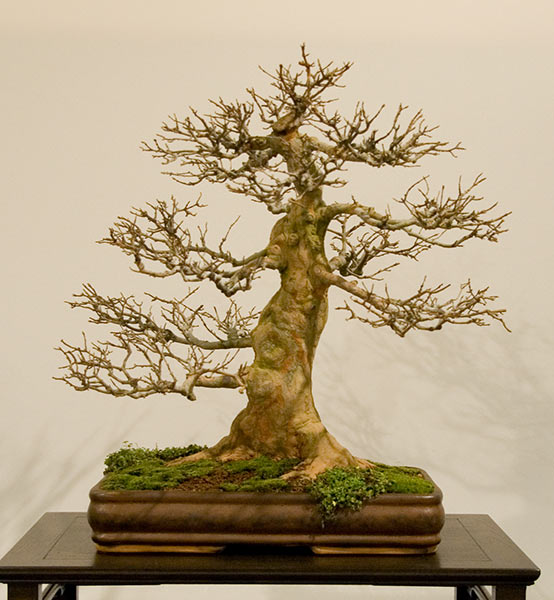 Bonsai Photo of the Day 3-5-20