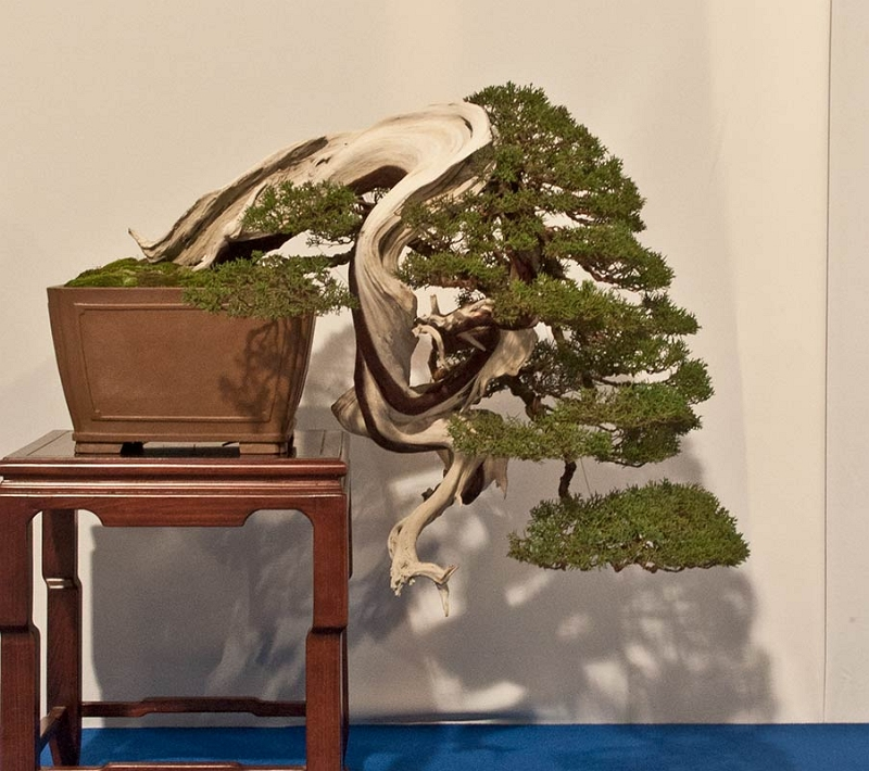 Bonsai Photo of the Day 3-9-20